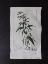 Turpin C1815 Antique Botanical Print. Ortie. Common Nettle 260